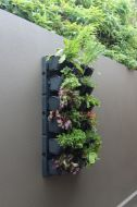 WATEX EXPANDABLE GREENWALL KIT SOUTH AFRICA